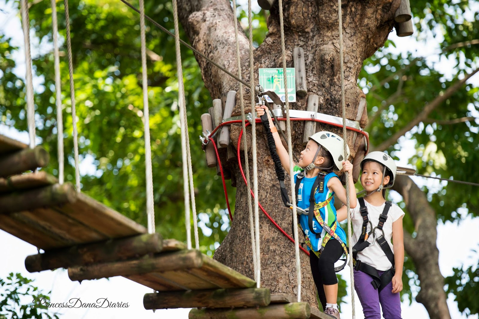 Forest Adventure Adventure In The Trees Life S Tiny
