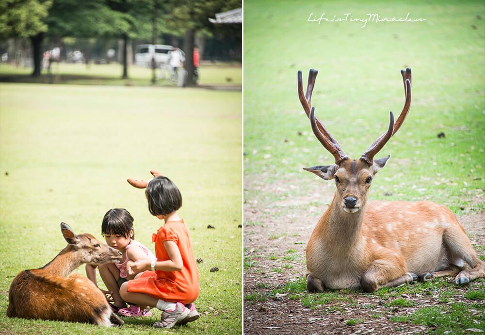 Nara Park Collage 1