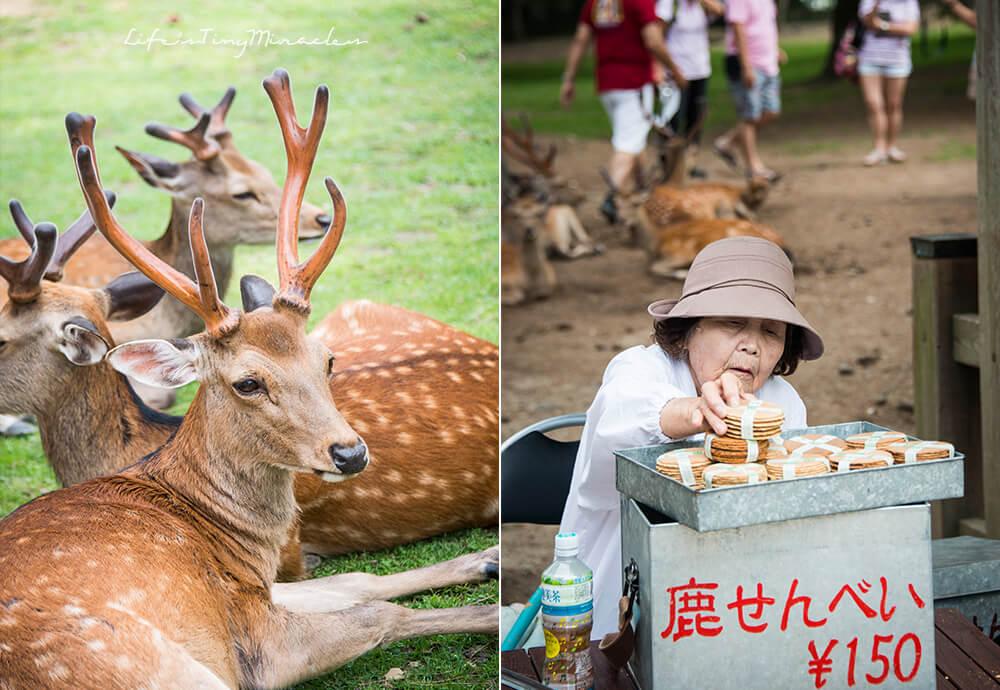 Nara Park Collage 2