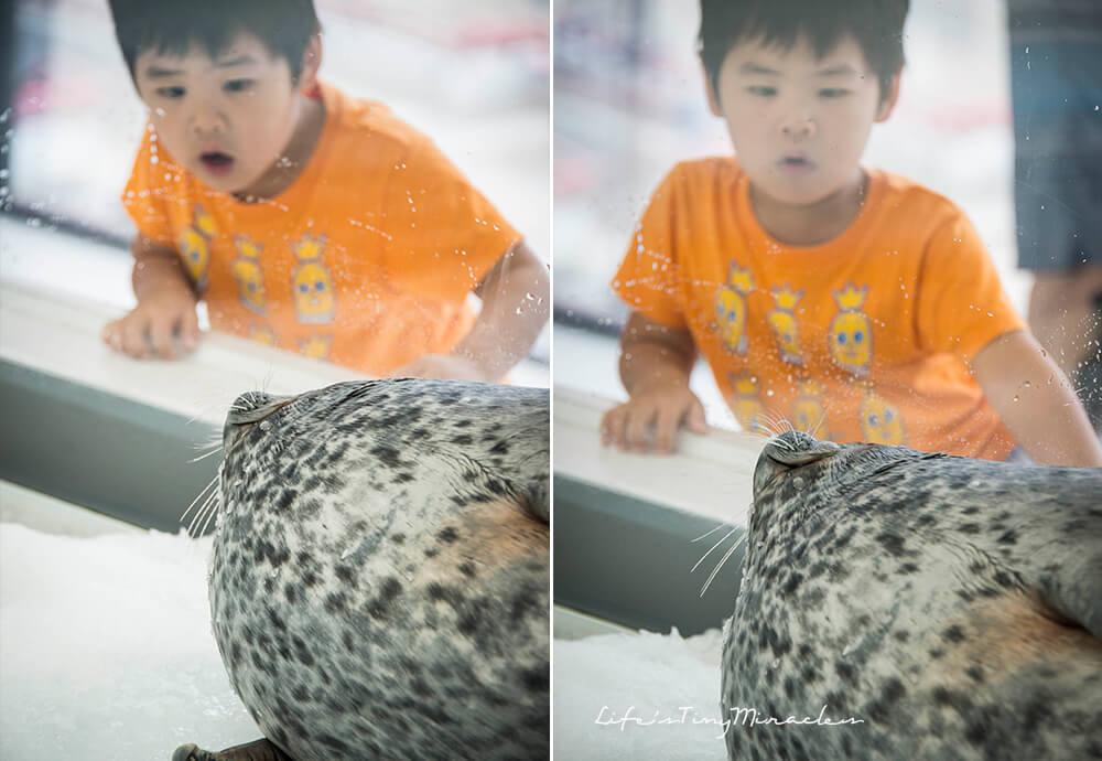 Osaka Aquarium Collage 4