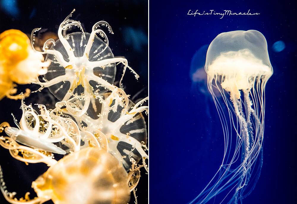 Osaka Aquarium Collge 3