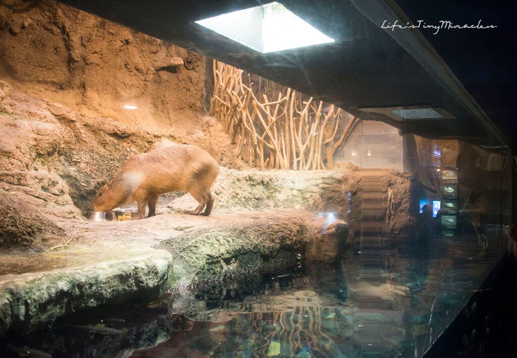 Osaka-Aquarium11