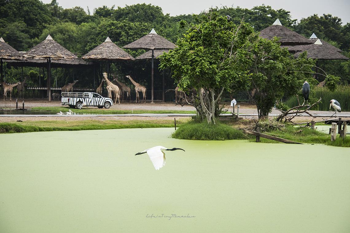 bkk-safari11