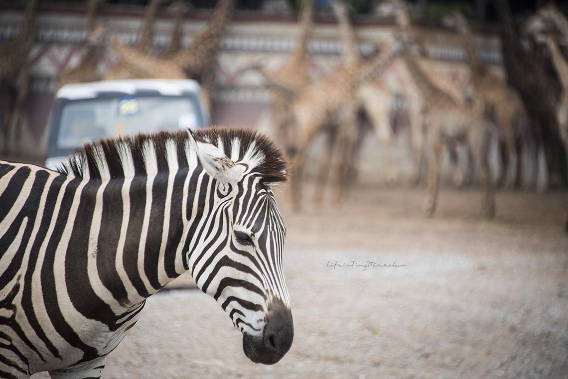 bkk-safari15